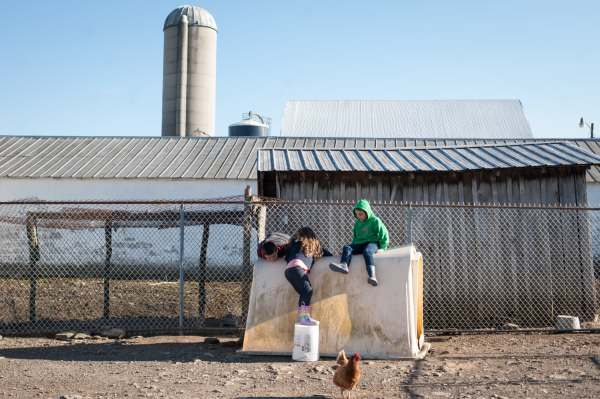 Siblings Anthony, 8, Nellie, 6, and Oliver Brown, 7, climb atop a shelter for calves as they play together in the barnyard, Wednesday, April 3, 2019, at their family farm straddling Saltlick and Bullskin. The Browns have struggled as the price for milk has plummeted nationally.