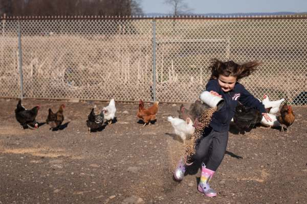 Nellie Brown, 6, wears the unicorn boots she got for her birthday as she feeds chickens, Wednesday, April 3, 2019, at her family's farm straddling Saltlick and Bullskin. Toys for Tots and the children's grandparents are the main sources of Christmas and birthday presents for the Browns right now. As Nellie gets older, she will be expected to help out more doing chores and working at the farm store, her mother says.