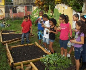 """The Saving vacant lots, participatory installation of ecological community gardens"""" was one of last year's grant winners."""