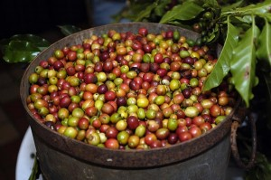 The agency is working with farmers to increase coffee production. (Credit: © Mauricio Pascual)