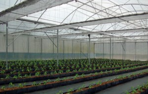 The greenhouse currently has 2,000 plants and an experimental area dedicated to producing different tomato and pepper varieties.