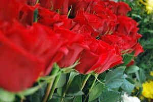 "Colombia's traditional red ""Freedom"" roses are the flowers with the highest demand around Valentine's Day. (Credit: Proexport)"