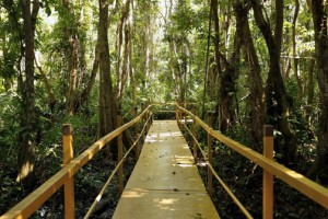 Last November, Palmas del Mar Residents Association opened a new boardwalk, built a visitor center and a bird observation tower on the premises of the 56-acre forest.