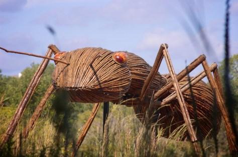 LBJWC ant