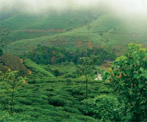 Green-Sri-Lanka