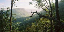 Lamington_National_Park