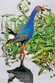 Lunawa-bird-watching-sri-lanka