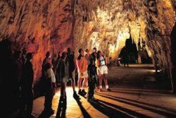 Rotorua to Auckland via Waitomo Glowworm Caves One-Way Tour