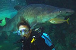Scuba-Diving-with-Sharks-Shark-Diving-Xtreme-at-Oceanworld-in-Sydney-Australia