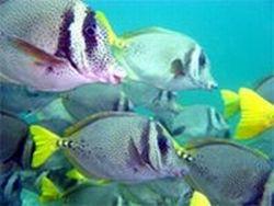 acapulco-beginners-scuba-diving-course-in-acapulco-mexico