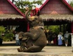 bangkok-rose-garden-cultural-center-and-thai-village-half-day-tour-in-bangkok-thailand