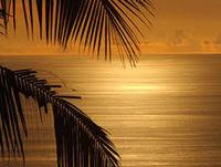 freeport-bonfire-on-the-beach-bahamas-style-in-freeport-bahamas
