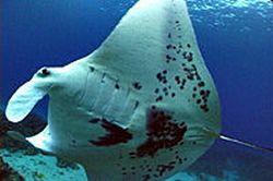 introductory-diving-in-aruba-in-oranjestad