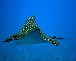 introductory-scuba-dive-in-puerto-plata-dominican-republic