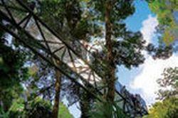mount-tamborine-national-park-full-day-tour-with-rainforest-skywalk-in-brisbane