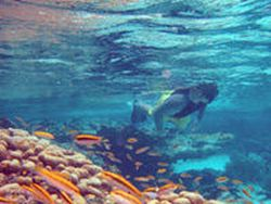 snorkelling-island-adventure-tour-of-antigua-in-st-johns