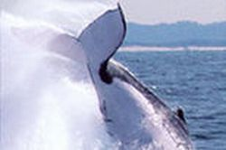 whale-watching-and-canal-cruise-from-the-gold-coast-half-day-tour-in-gold-coast
