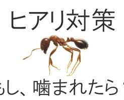 ヒアリの大きさと見分け方