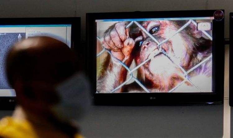 How is monkeypox transmitted?
