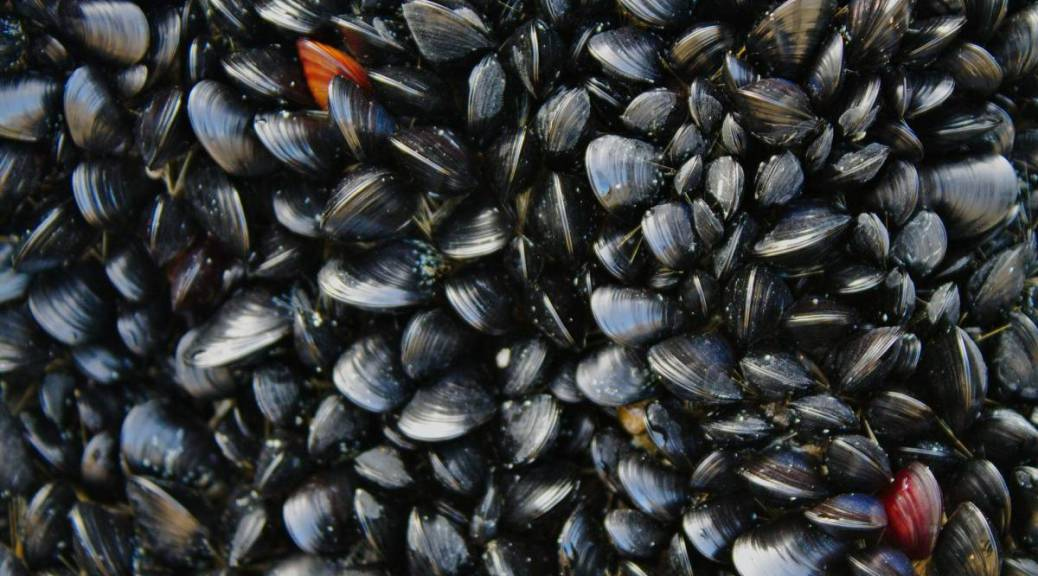 Norwegian Food Safety Authority warns against eating mussels in several places