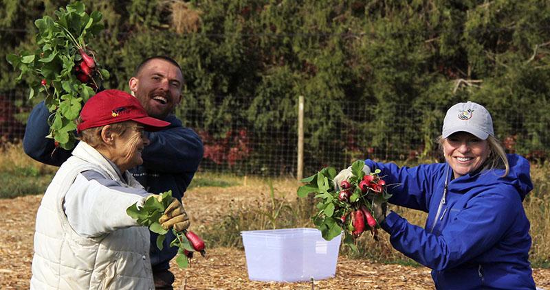 Harvest at Little Portion Farm