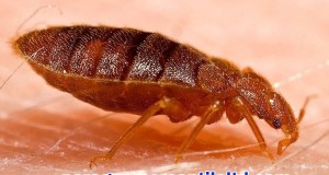 i-spent-months-battling-bed-bugs-and-years-trying-to-get-them-out-of-my-head-body-image-1438279804-size_1000