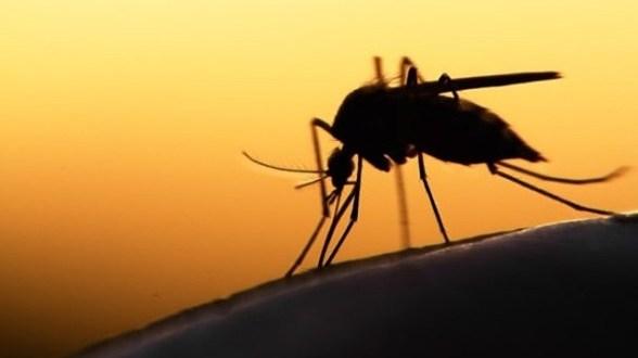 vitamin for mosquito