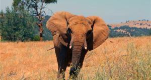 elephant killed italian tourist