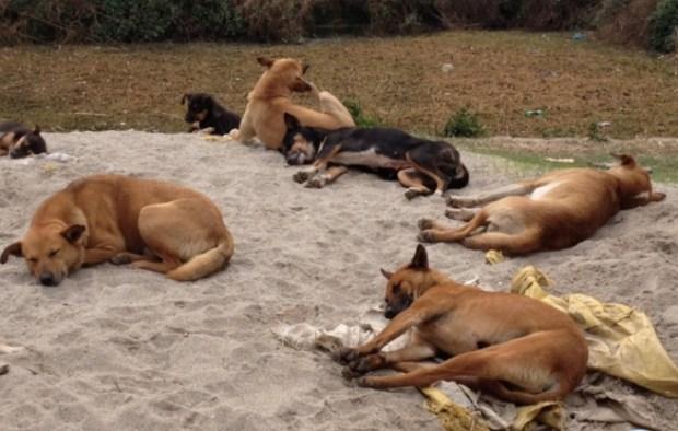 Over 1000 Dogs Vaccinated In Kibra Nairobi, Kenya