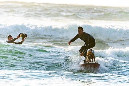 Tips for Vacationing with Your Pet New Smyrna Beach