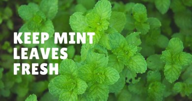 How to preserve mint leaves for long time
