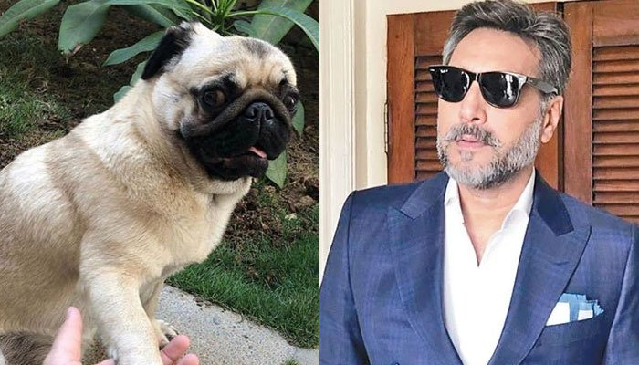 Adnan Siddiqui lost his dog coco