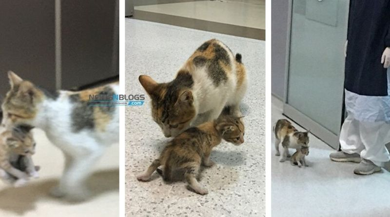 Mama Cat brings her ill Kitten to Hospital, Medics Immediately Rush to Help