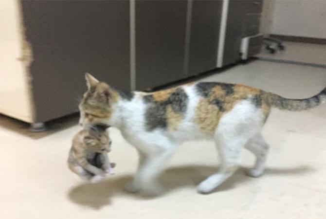 cat bringing her ill kitten to hospital