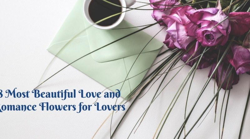 8 most beautiful love and romance flowers for lovers