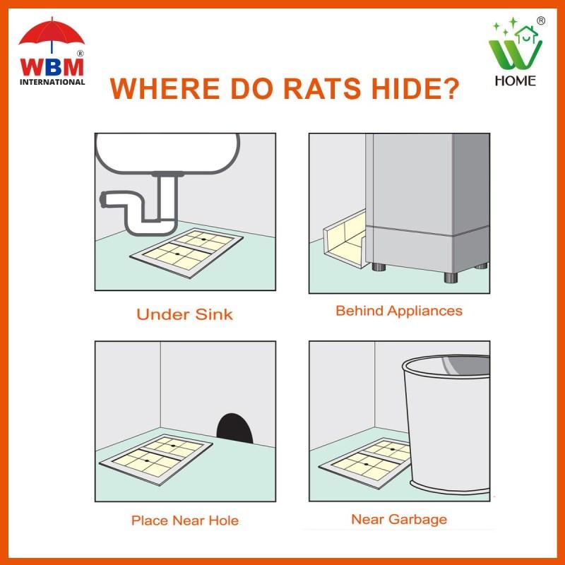 Where do rats hide?