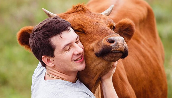 Why is everyone hugging the cow