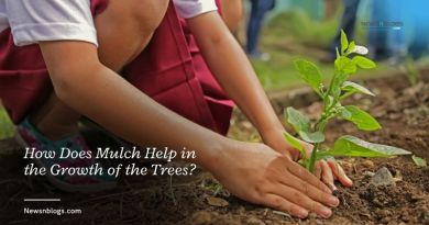 How Does Mulch Help in the Growth of the Trees?