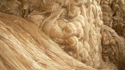 পাটকল শ্রমিকদের বকেয়া মেটাতে ৮১ কোটি টাকা বরাদ্দ