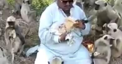 अहमदाबाद के स्वप्निल 500 से ज्यादा बंदरों को स्वप्निल रोटी खिलाते हैं। वो बंदरों के लिए हर सोमवार 1700 रोटियां बनवाते हैं।