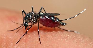 देहरादू में डेंगू के कई मामले आए सामने