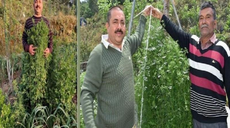 उत्तराखंड के अल्मोड़ा के किसान को अंतरराष्ट्रीय स्तर पर प्रदेश नाम रोशन किया है। जैविक विधि से सबसे ऊंचा धनिया उगाने का रिकॉर्ड बनाया है।उत्तराखंड के अल्मोड़ा के किसान ने अंतरराष्ट्रीय स्तर पर प्रदेश नाम रोशन किया है। जैविक विधि से सबसे ऊंचा धनिया उगाने का रिकॉर्ड बनाया है।