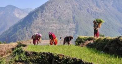 कोरोना संकट के बीच पहाड़ों के किसानों के लिए एक अच्छी खबर आई है। प्रधानमंत्री फसल बीमा योजना की शुरुआत अब पहाड़ी इलाकों में भी हो गई है।