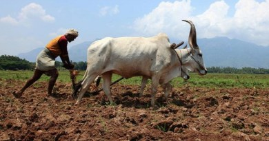 अल्मोड़ा: कृषि विभाग देने जा रहा है 97 हजार किसानों को लाभ, KCC के लिए ऐसे करें आवेदन