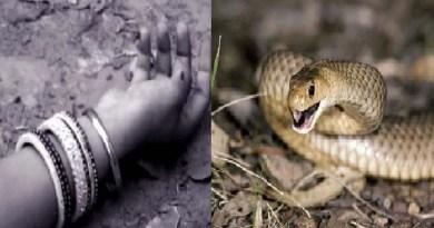 बागेश्वर: खेत में गई महिला को सांप ने डसा, अस्पताल में हुई मौत, दहशत में लोग!