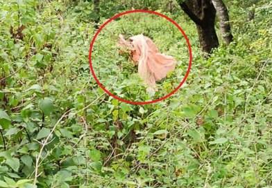 पौड़ी गढ़वाल के कल्जीखाल ब्लॉक के थापला में कांसदेव का महादेव मंदिर के पुजारी राम प्रसाद का शव झाड़ियों में मिला है।