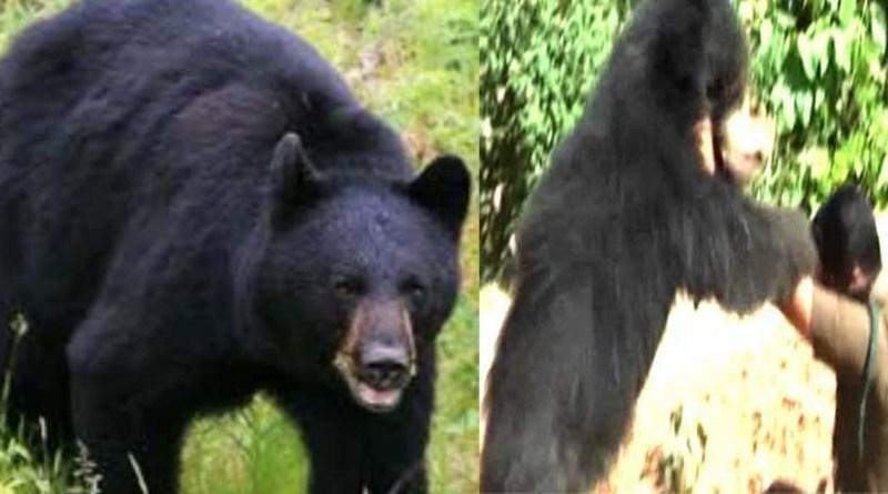 थरालीः खेत में काम कर रहे किसान पर भालू ने किया हमला, चीख पुकार सुन मौके पर पहुंचे लोगों के उड़े होश!