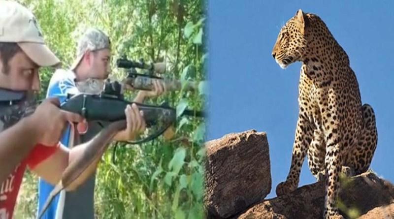 नैनीताल: वन विभाग की पकड़ में नहीं आया 'आदमखोर', अब मेरठ से बुलाई गई शिकारियों की टीम