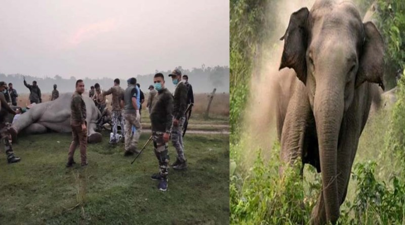 हरिद्वार वन विभाग का बड़ा कदम! अब आबादी क्षेत्र में नहीं आ पाएगा हाथी, पहली बार हाथी पर लगाया गया ये सेटेलाइट अपकरण