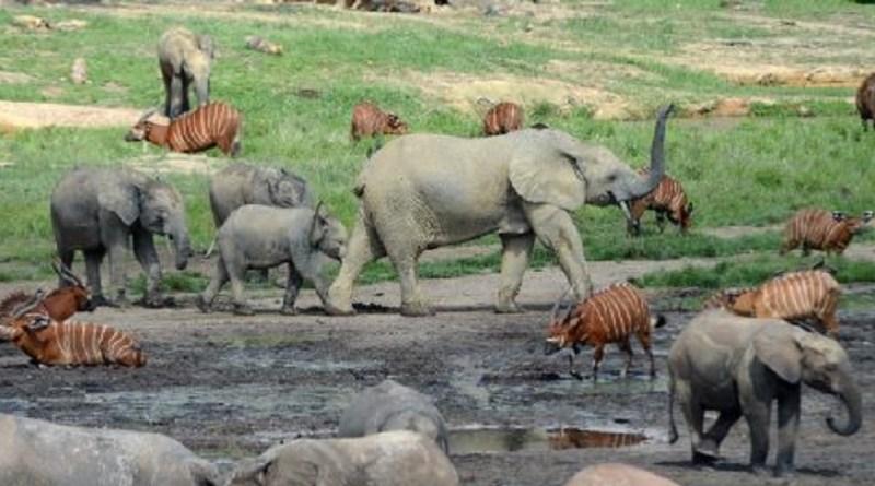 उत्तराखंड की त्रिवेंद्र सिंह रावत सरकार जंगल और जंगली जानवरों को बचाने के लिए कई कदम उठा रही है। इसी कड़ी में सरकार ने गुरुवार को उत्तराखंड forest & wildlife helpline नंबर 1926 की शुरुआत की।